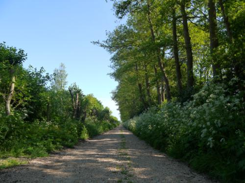 Het is heerlijk wandelen in het Saresweggetje recht tegenover de camping