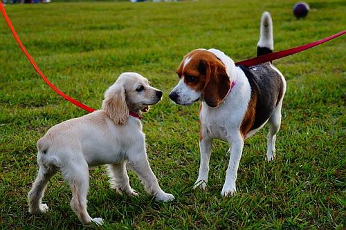 Honden zijn ook welkom! Zelfs meerdere honden zijn toegestaan
