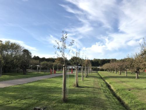 Nieuwe fruitbomen aangeplant voorjaar 2018