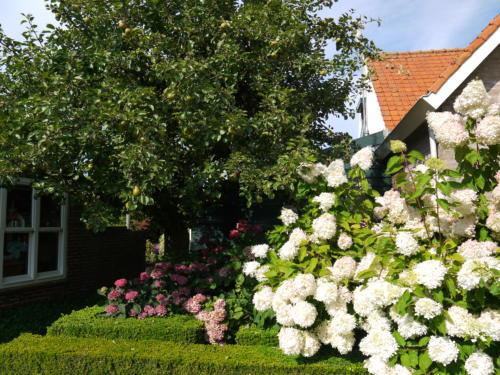 Veel bloemen en groen rond het huis