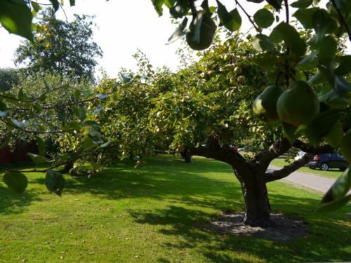 Tussen de fruitbomen