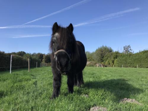 Pony Emmelie