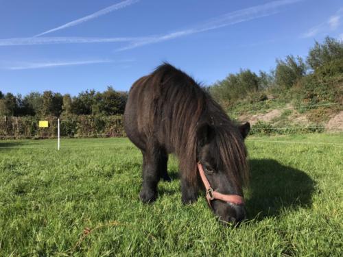 Pony Pippi